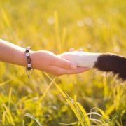 Pet Friendly Luxury Rehab