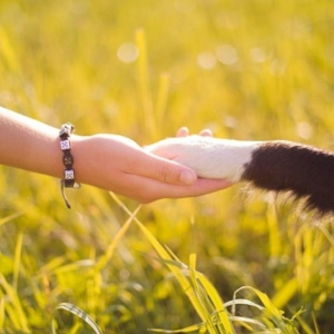 Dog Paw Handshake